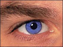 d couverte si vos yeux sont marrons alors ils sont bleus sharknews. Black Bedroom Furniture Sets. Home Design Ideas