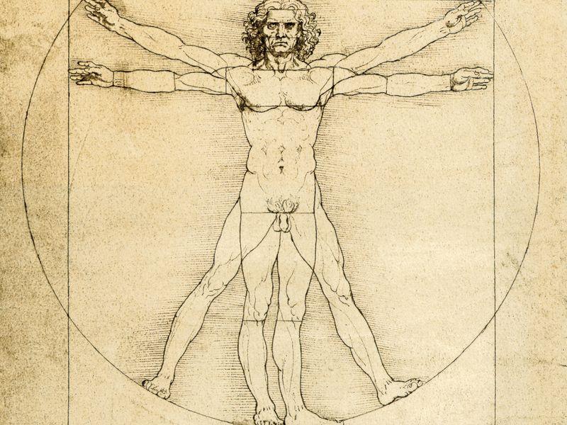 proportions_homme_evolution_penis_diminution_allongement