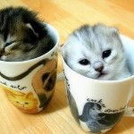 bebes-animaux-sinvitent-mugs-L-1