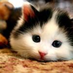 47733-cats-cute-cat-image