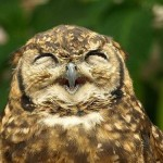 owls-being-cute-18