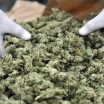 1899128_cannabis