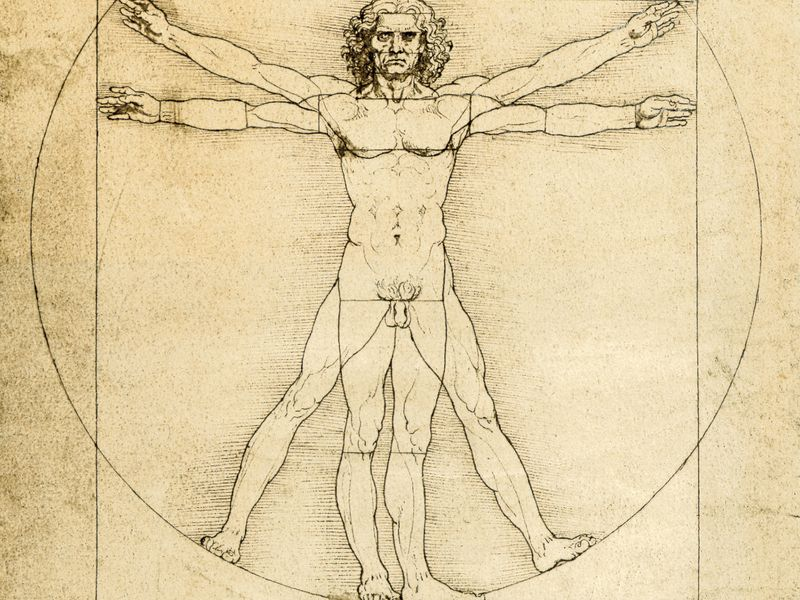 proportions_homme_evolution_penis_diminution_allongement