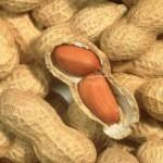 arachide_cacahute_allergie_science_avancee