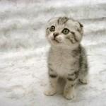 super_chat_mignon._Beautiful_cat._Cat_avatar._Avatar_de_chats