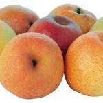 Papplesafruitsonewitisyettobenamedbutdescribedasapeardisguisedasanapple