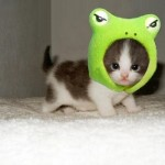 animaux-mingnons-pingouin-chaton-cute-chien-video-humour-