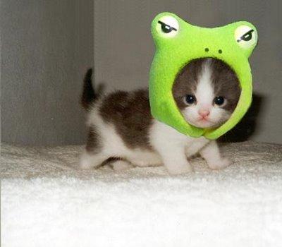 animaux-mingnons-pingouin-chaton-cute-chien-video-humour-