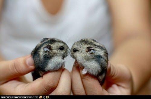 des-animaux-mignons-cute