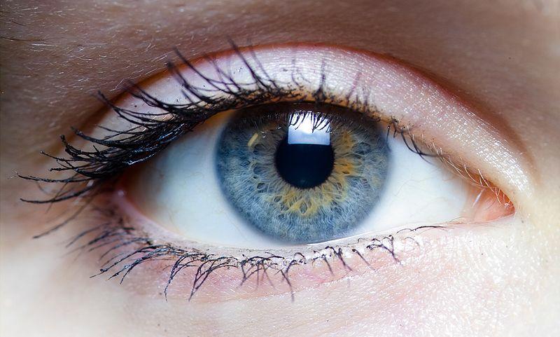 oeil-macula-DMLA-depistage-ophtalmologie-maladie-sante-seniors-vision