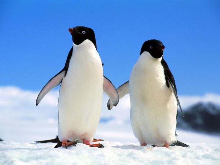 pingouin-deprave-sexuel-viol-necrophilie-sexe