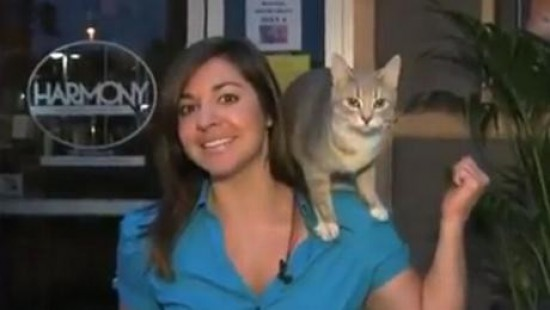 chat-journaliste-attaque-nicole-didonato-fox-17