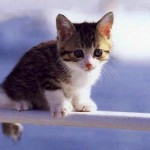 chaton-mignon-animaux-cute-chat-video-craquant-fluffy-cuteness-overflow