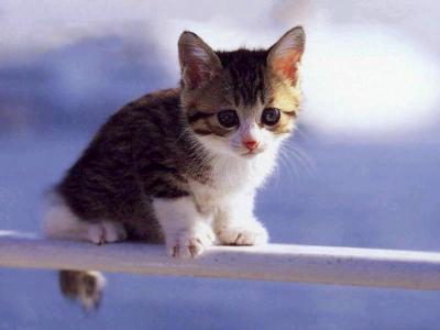 Des animaux mignons 13 des chatons pour la fin du bac sharknews - Photo chat mignon ...
