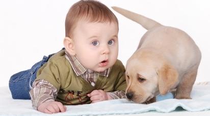 chien-chat-animaux-bebe-systeme-immunitaire-kupio-sante-recherche-etude-finlande-pediatrics