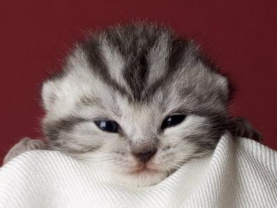 cute-cat-video-mignonnes-chat