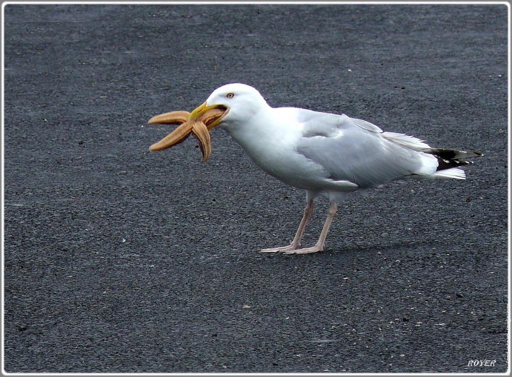 oiseau-064