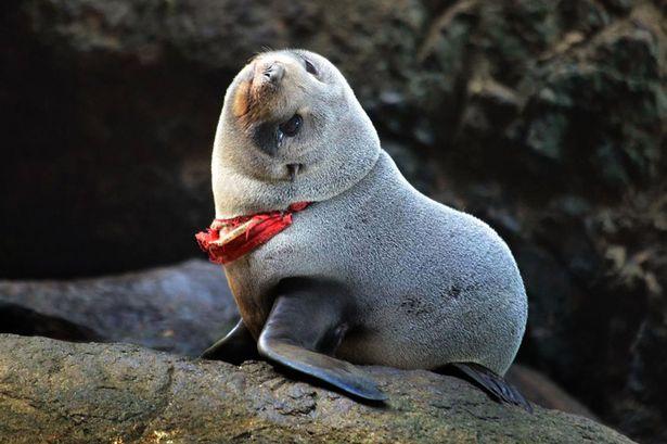 Seal_2