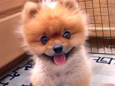 dog-cute-baby