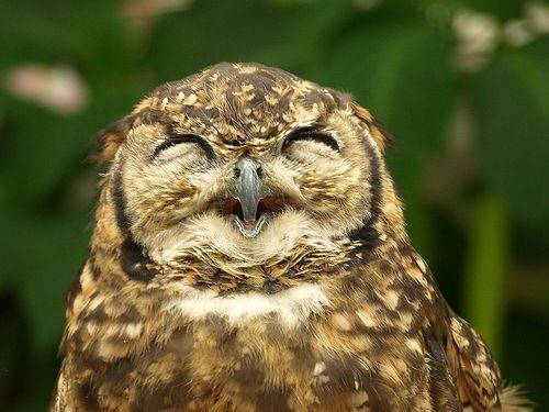 owls-being-cute-18