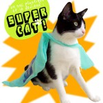 super-cat-blog-photo