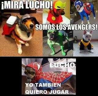 37351-dogs-the-dogs-avengers