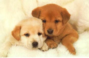 puppy_dog_370942484