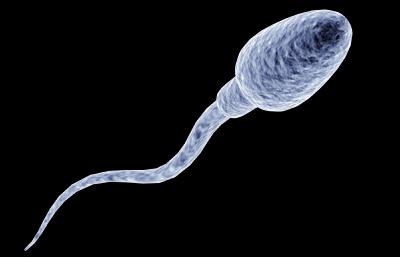 spermat